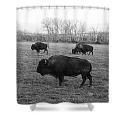 Bison In Black And White Shower Curtain