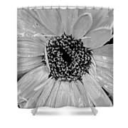 Black And White Gerbera Daisy Shower Curtain