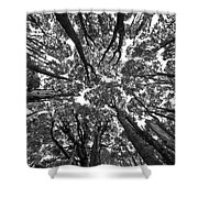 Black And White Nature Detail Shower Curtain