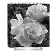 Black And White Roses 2 Shower Curtain