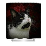 Black And White Tuxedo Cat Shower Curtain
