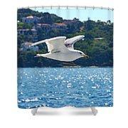 Black-backed Gull Shower Curtain
