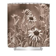 Black-eyed Susans Shower Curtain