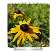 Black Eyed Susans Shower Curtain