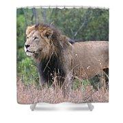 Black Maned Lion Shower Curtain