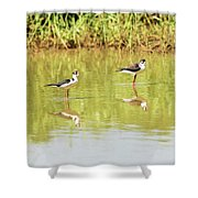 Black Necked Stilt, In The Pond In The Galapagos Shower Curtain