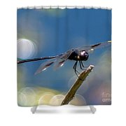 Black Spotted Dragonfly Shower Curtain