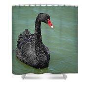 Black Swan Shower Curtain