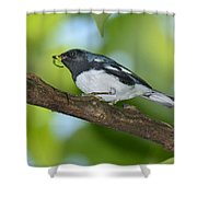 Black-throated Blue Warbler Shower Curtain