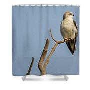 Black Winged Kite  Shower Curtain