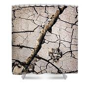 Blair Cracked Mud 1685 Shower Curtain