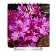 Blooming Azaleas Shower Curtain