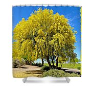 Blooming Palo Verde Shower Curtain