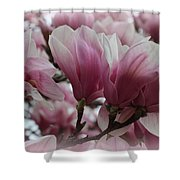 Blooming Pink Magnolias Shower Curtain