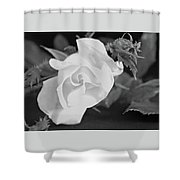 Blooming Rose Shower Curtain