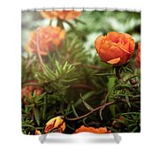 Blossomed Shower Curtain