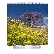 Blossoming Jacaranda Shower Curtain