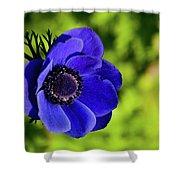 Blue Bonnet Shower Curtain