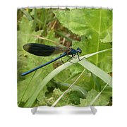 Blue Dragonfly On Leaf Shower Curtain