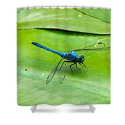 Blue Dragonfly On Lily Pad Shower Curtain