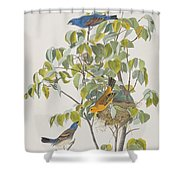 Blue Grosbeak Shower Curtain