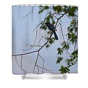 Blue Jay In Tree Shower Curtain