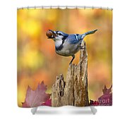 Blue Jay With Acorn Shower Curtain