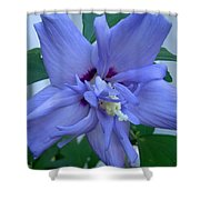Blue Rose Of Sharon Shower Curtain