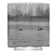 Blue Wing Teal Pair Shower Curtain
