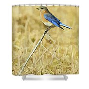 Bluebird In February Shower Curtain