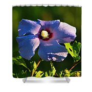 Bluebird Rose Of Sharon Shower Curtain