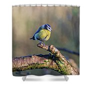 Bluetit On A Branch Shower Curtain