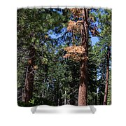 Bluff Lake Forest 6 Shower Curtain