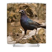 Boat-tailed Crackle Shower Curtain
