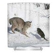 Bobcat Lynx Rufus Hunting Muskrat Shower Curtain