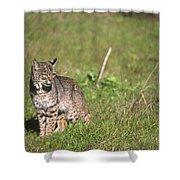 Bobcat - Wildcat Beach Shower Curtain