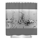 Bones On The Beach  Shower Curtain