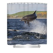 Bottlenose Dolphin - Scotland  #14 Shower Curtain