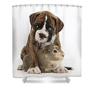 Boxer Puppy And Guinea Pig Shower Curtain