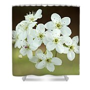 Bradford Pear Flower Shower Curtain