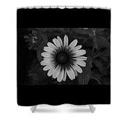 Brown Eyed Susan Shower Curtain