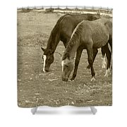 Brown Horses Grazing Shower Curtain
