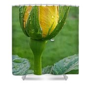 Bud Of Rose  Shower Curtain