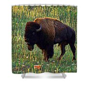 Buffalo Custer State Park Shower Curtain