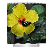 Butterflies Are Blooming 25 Shower Curtain