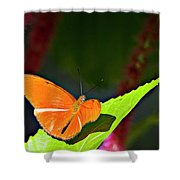 Butterfly 22 Shower Curtain