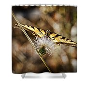Butterfly Shower Curtain by Kelley King