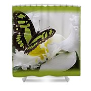 Butterfly On White Shower Curtain