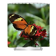 Long Winged Beauty Shower Curtain