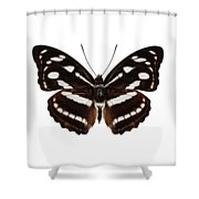 butterfly species Athyma reta moorei Shower Curtain